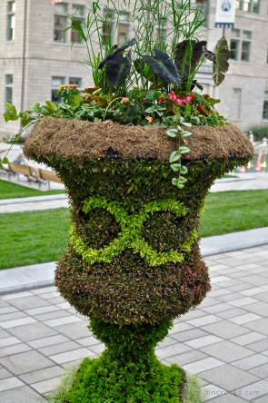 Unique Flower Display - Old Québec City