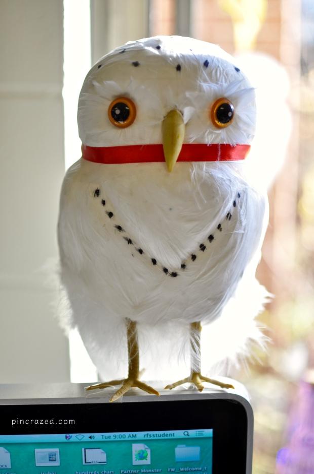 hedwig-owl